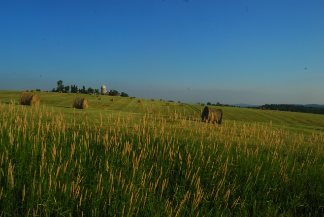 Hay Feeds The Cows of America's Dairyland