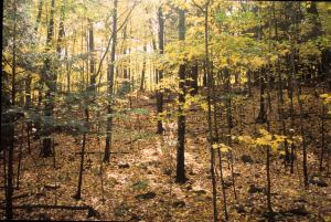 Wausau's Little Known Nature Preserve