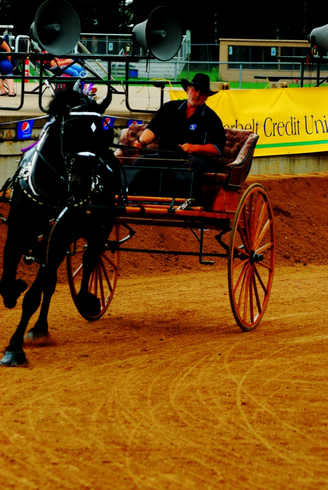 Carriage pull competition at the Draft Horse Invitational in the 2011 Wisconsin Valley Fair
