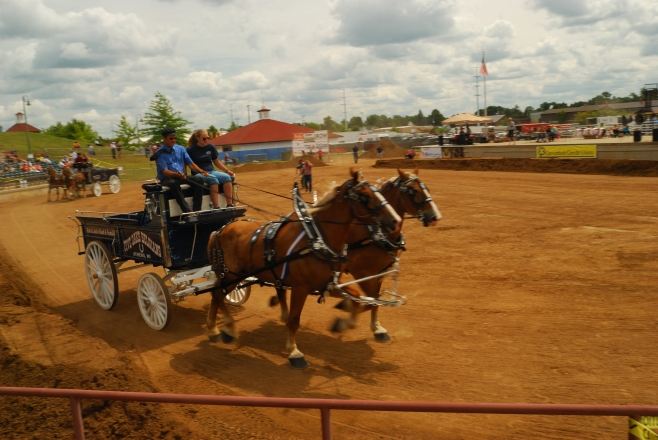 A tandem hitch pulls a wagon at the 2013 Wisconsin Valley Fair.