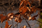 autumn-at-home-1-of-1-7