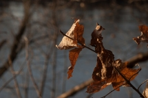 autumn-at-home-1-of-1-9